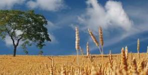 transformation agricole